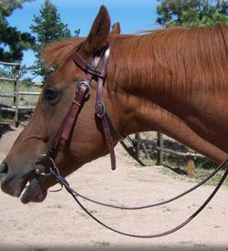Western Headstall ~ Leather